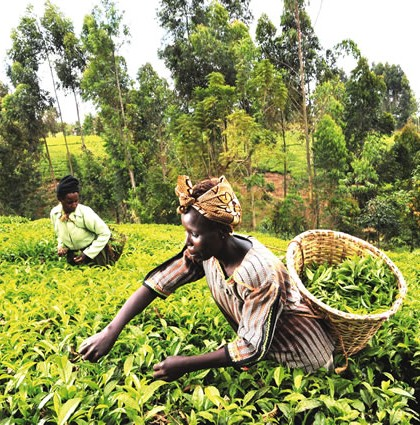 World Bank intervention in Nigeria's agriculture hits $1.5bn