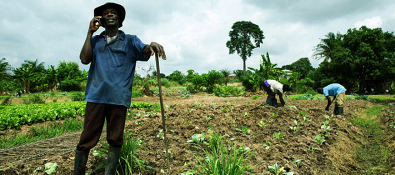 Ghanaian Agrictech startup farmerline receives AFBD grant funding