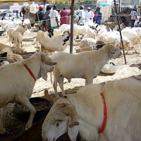 Sénégal: Préparatifs de la Tabaski: l'Etat vire les salaires et débloque 20 milliards pour la dette intérieure