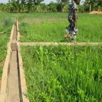 Sénégal: L'Agriculture, Levier Performant du Plan Sénégal Emergent