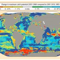 Dossier – Impact du réchauffement climatique sur les oceans