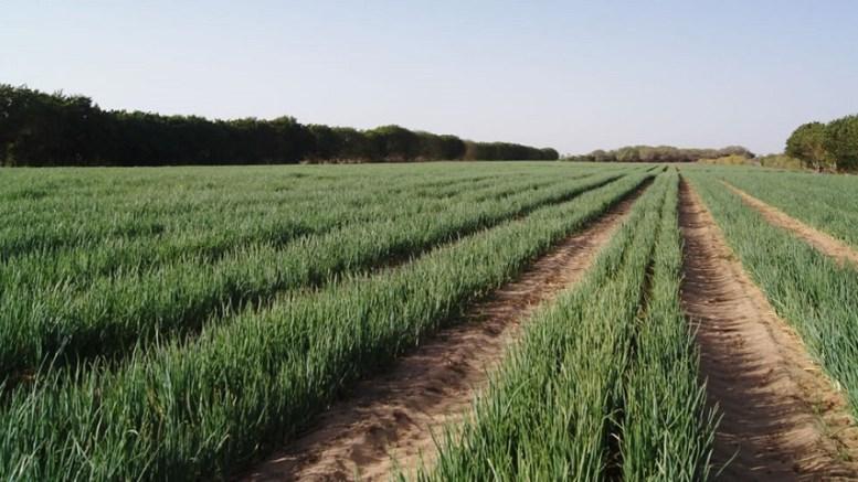 Agriculture au Sénégal