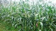 Services agricoles