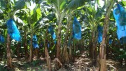 agro-business