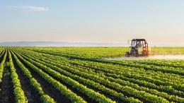 Agriculture, L'ITFC au chevet de la Gambie