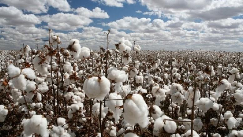 Le coton malien