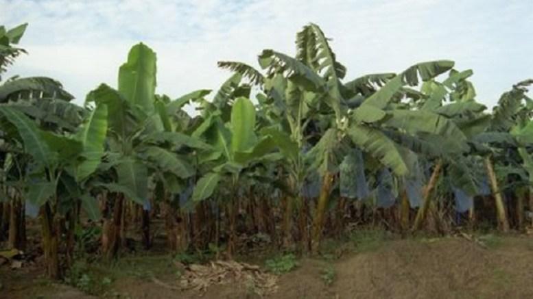 CDC Cameroun