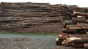 SSMO Dans l'exploitation illicite des forêts