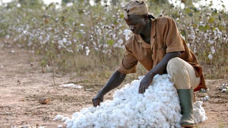 producteur de coton