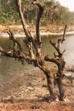 mangroven 001