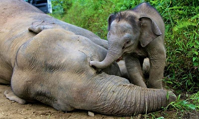 botswana éléphants mortsactéries