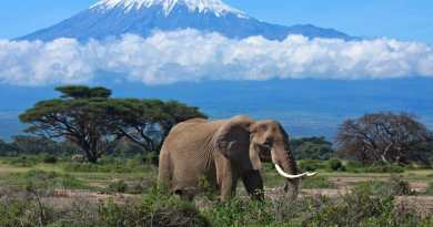 Tanzanie: Le pays enregistre une hausse du nombre de touristes étrangers