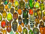 Beetles at the Insectarium
