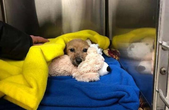 Weird: A puppy was thrown under a bridge with a slam mouth