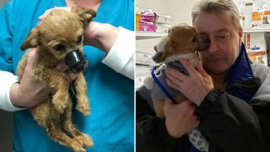 Little Louie was rescued by Bob Hoelter and can not be lucky when he is reunited with his saving angel.