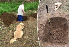 Heartbreaking: owner digs grave for dog while animal watches