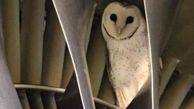 Virgin Airlines finds special stowaways on board flights