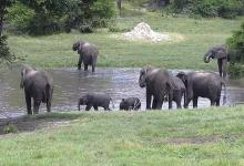 Botswana grants elephant hunting again