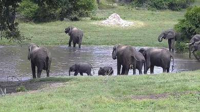 Botswana grants elephant hunting again