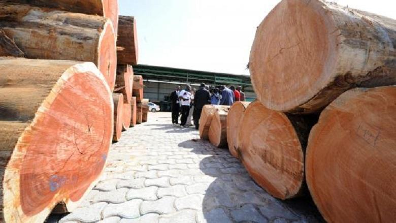 In Gabon, top officials suspended for 'kevazingo' timber trafficking