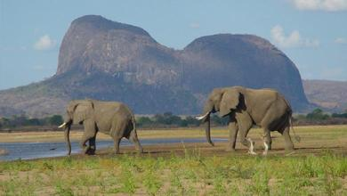 """Year without elephant poaching in Africa reserve: """"Very hopeful"""""""