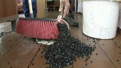 """Large fly plague terrorizes Russian villages: """"Scene from a horror film"""""""