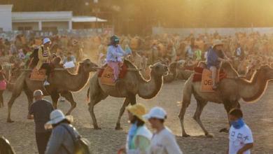 Traffic jams in the desert for 'romantic camel ride'