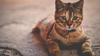 How to live with a cat when you're allergic?