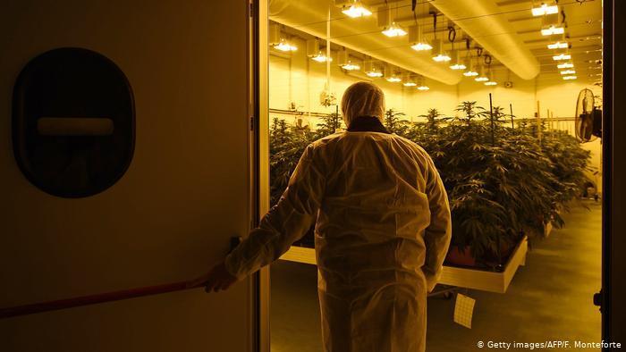 Italy authorized home-grown cannabis