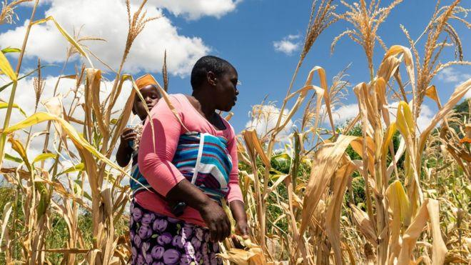 What to know on UN warns of possible famine in Zimbabwe