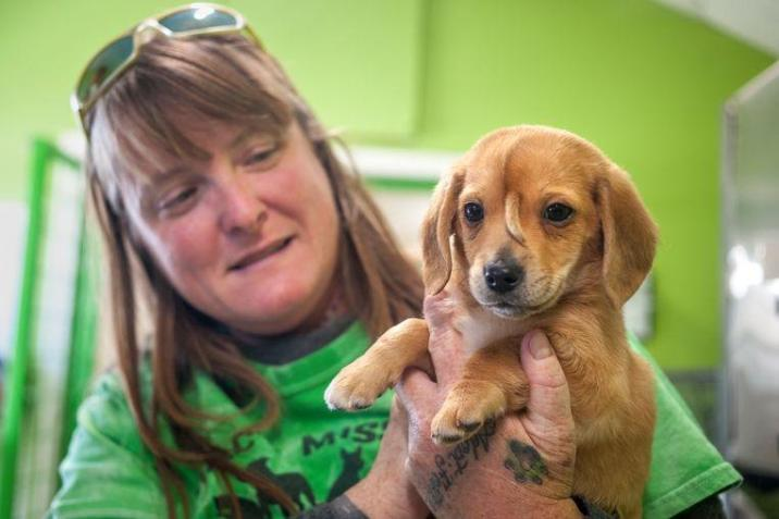 Cute puppy with 'tail' on forehead finds a warm home