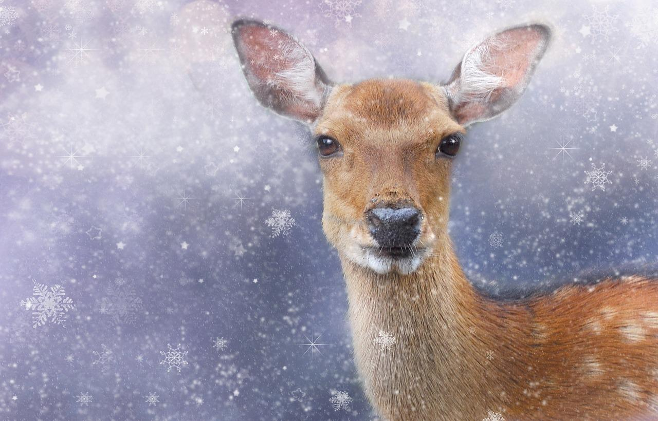 Man rescues helpless deer from a frozen lake in Canada