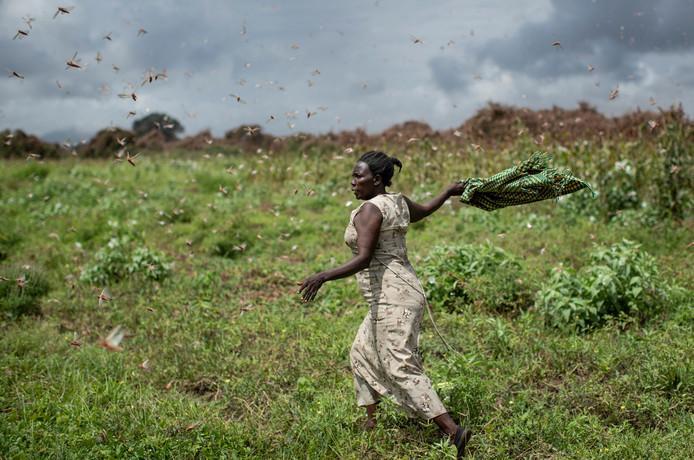 New locust plague threatens East Africa despite corona crisis