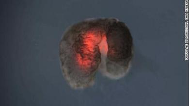 Scientists develop new life form: the 'living robot'