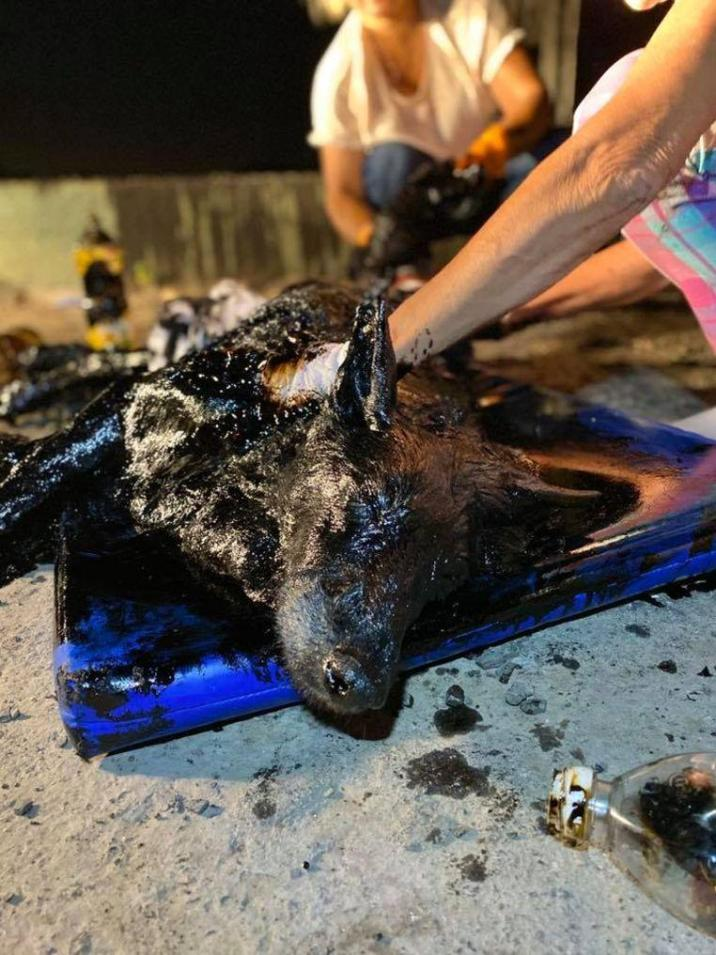 Gruesome: Animal lovers save dog completely covered with tar
