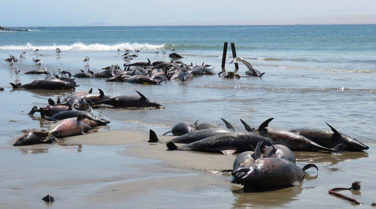 Namibia investigates the mysterious death of 86 dolphins