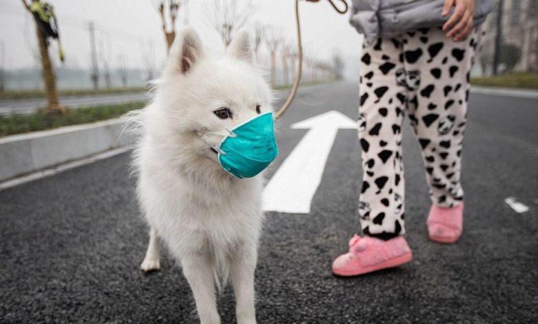 First dog with coronavirus in Hong Kong in quarantine