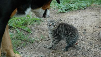 China to ban the eating of cat and dog