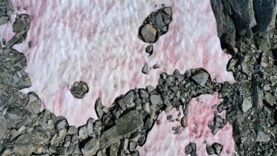 Mystery surrounding pink snow on Italian glacier
