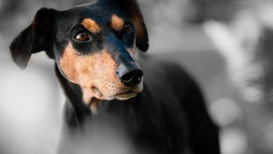 Dubai uses police dogs to detect travelers with coronavirus