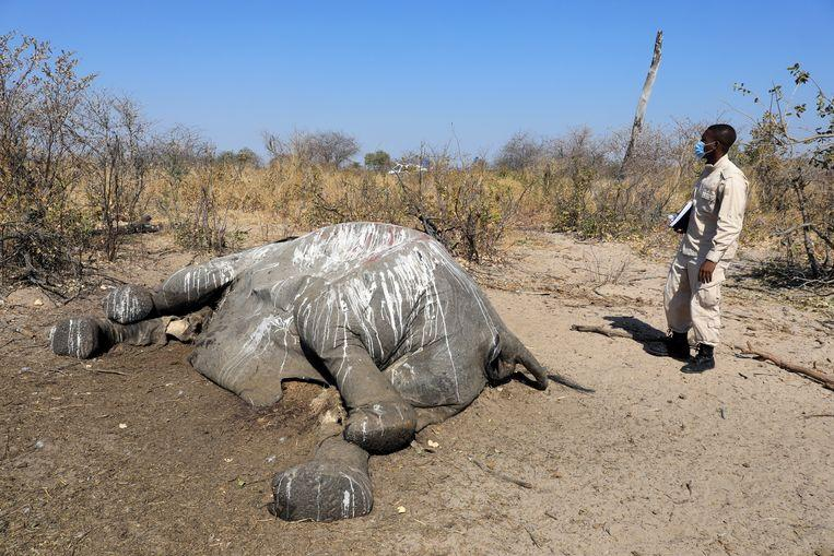 Cause of elephant death in Botswana remains a mystery