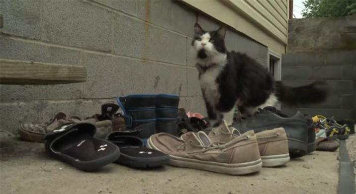 Cat steals many shoes that his owner create Facebook group to return them