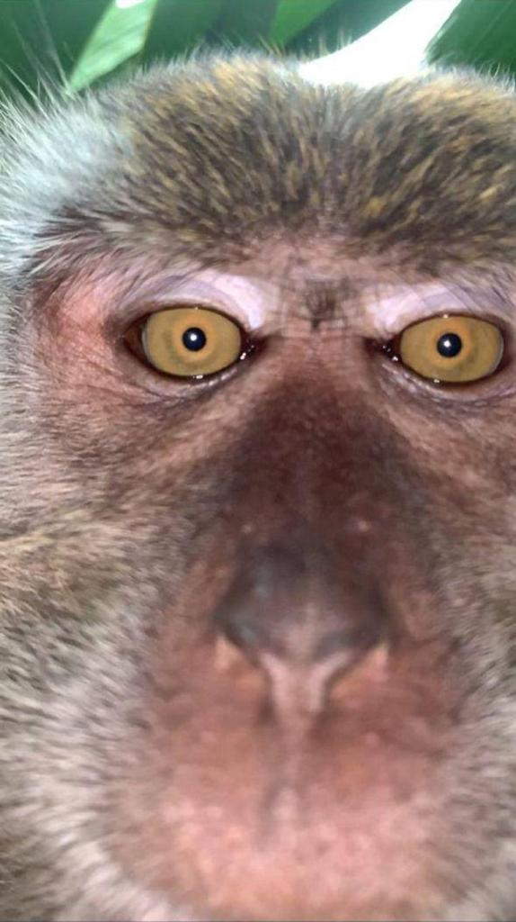 Monkey happily took different selfies from a stolen phone