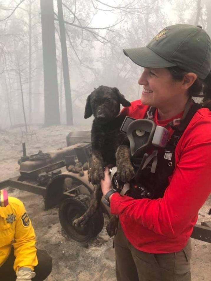 Puppy Trooper was found in the remains of the California wildfires.