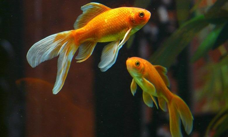Do you hate noise? You are not alone, it also makes fish sick