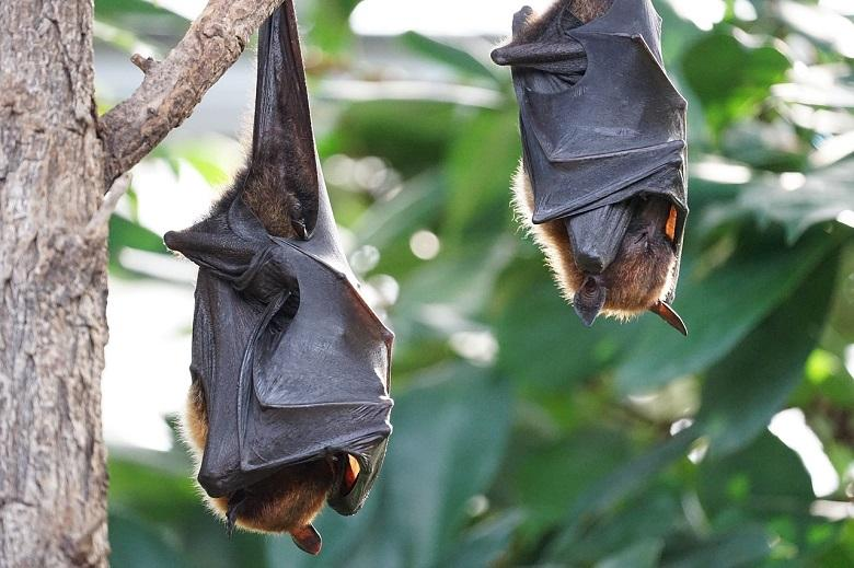 Bats also adhere to the distance rule (if they are sick)