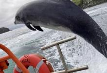 All Ireland in search of beloved dolphin Fungie who disappeared after 37 years