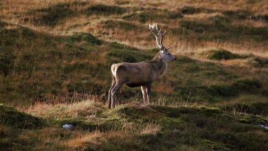 In Czech Republic, Deer stole the hunter's rifle and ran away