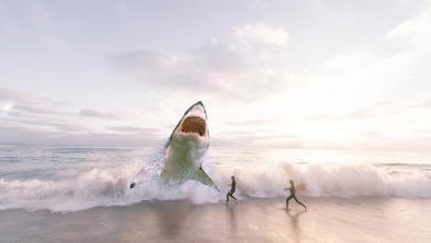 Top 5 Strongest animals in the ocean
