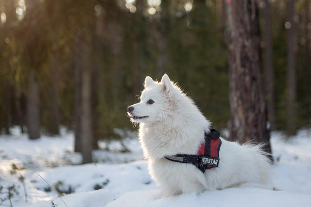 Winter pet safety tips: guide your pet through the cold winter